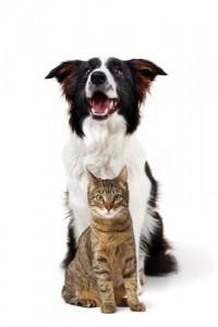 Gicht kann auch bei Tieren auftreten. Empfohlene Maßnahmen zur Behandlung sind ähnlich wie beim Menschen. gefunden auf: https://www.was-ist-gicht.de/gicht-bei-tieren.html